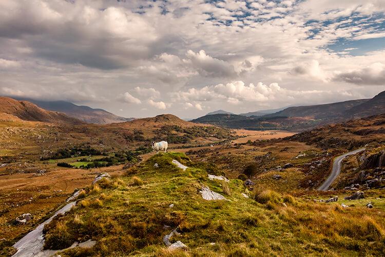 Böljande landskap på Irland