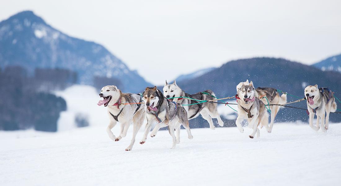 Hundspann som aktivitet för kickoff i Åre